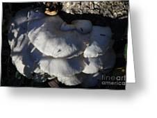 Fall Mushrooms Greeting Card by Rick Rauzi