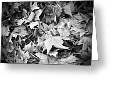 Fallen Leaves Greeting Card by Fabrizio Troiani