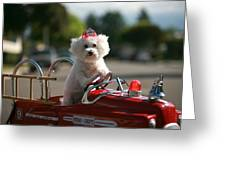 Fifi To The Rescue Greeting Card by Michael Ledray