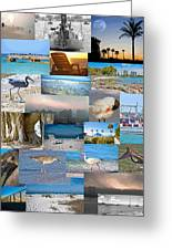 Florida Collage Greeting Card by Betsy A  Cutler