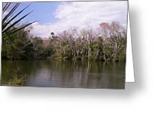 Florida Wetlands In Winter Greeting Card by PJ Jackson