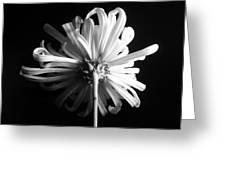 Flower Greeting Card by Sumit Mehndiratta