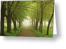 Foggy Park Greeting Card by Elena Elisseeva