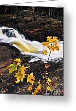 Forest River In The Fall Greeting Card by Elena Elisseeva
