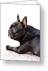 French Bulldog Greeting Card by Ritmo Boxer Designs