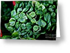 Fresh Chives Greeting Card by Susan Herber