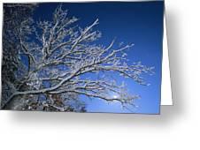 Fresh Snowfall Blankets Tree Branches Greeting Card by Tim Laman