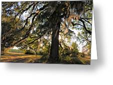 Gentle Breeze Greeting Card by Jan Amiss Photography