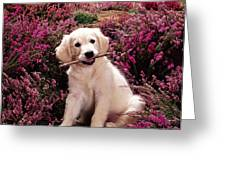 Golden Retriever Puppy Greeting Card by Jane Burton