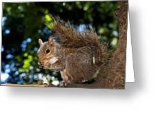 Gray Squirrel Greeting Card by Fabrizio Troiani