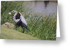 Great Blue Heron Greeting Card by Donna Van Vlack