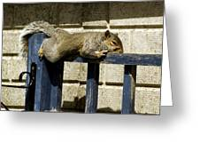 Grey Squirrel Greeting Card by Mike Lester