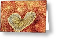 H5n1 Avian Influenza Virus Particle, Tem Greeting Card by Nibsc