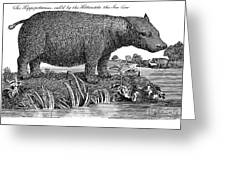Hippopotamus Greeting Card by Granger