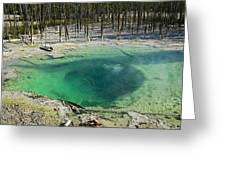 Hot Springs Yellowstone National Park Greeting Card by Garry Gay