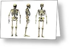 Human Skeleton Anatomy, Artwork Greeting Card by Victor Habbick Visions