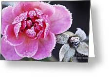 Icy Rose Greeting Card by Elena Elisseeva