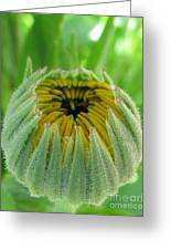 Inverted Greeting Card by Tina Marie