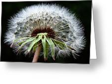 Its A Dandy Greeting Card by Karen M Scovill