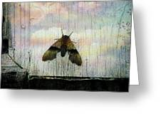 Just Arrived Greeting Card by Shirley Sirois