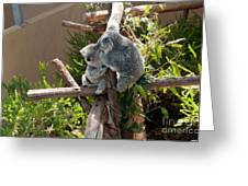 Koala Greeting Card by Carol Ailles