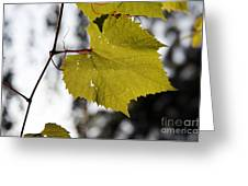Leaves Of Wine Grape Greeting Card by Michal Boubin