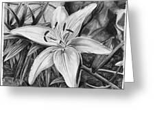 Lily Greeting Card by Susan Schmitz
