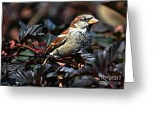 Little Sparrow Greeting Card by Elaine Manley