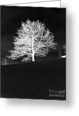 Lone Tree Greeting Card by David Bearden