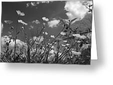 Looking Up  Greeting Card by Betsy A  Cutler