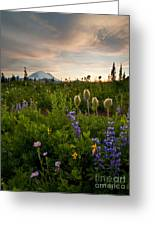 Lupine Sunset Greeting Card by Mike  Dawson