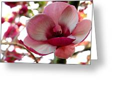 Magnolia Greeting Card by Nancy Greenland