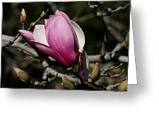 Magnolia World Of Beauty Greeting Card by Valia Bradshaw