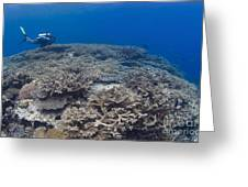 Masses Of Staghorn Coral, Papua New Greeting Card by Steve Jones