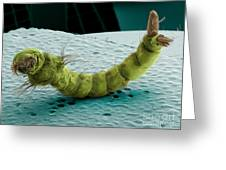 Mosquito Larva, Sem Greeting Card by Ted Kinsman
