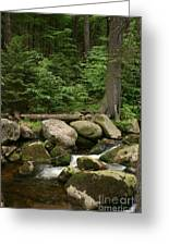 Mountain Stream Greeting Card by Torsten Dietrich