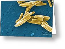 Mycobacterium Tuberculosis Sem Greeting Card by Science Source
