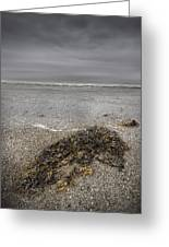 On The Beach Greeting Card by Andy Astbury