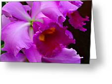 Orchid 5 Greeting Card by Julie Palencia