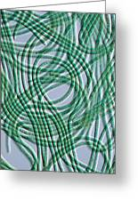 Oscillatoria Cyanobacteria, Dic Image Greeting Card by Sinclair Stammers