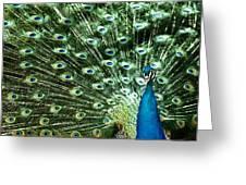 Peacock Greeting Card by Ivan Vukelic