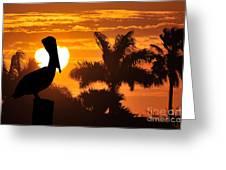 Pelican At Sunset Greeting Card by Dan Friend