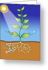 Photosynthesis, Artwork Greeting Card by David Nicholls