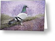 Pigeon In The Park Greeting Card by Bonnie Barry