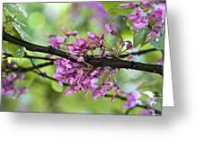 Pink flowers of the Love Tree Greeting Card by Frank Tschakert
