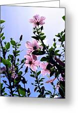 Pink Hibiscus Greeting Card by Kevin Smith