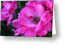Pink Roses Greeting Card by Bruce Bley