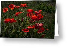 Poppies Greeting Card by Svetlana Sewell