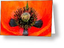 Poppy Heart Greeting Card by Karon Melillo DeVega