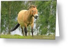 Przewalksi's Wild Horse Greeting Card by Roy  McPeak